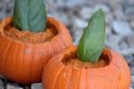 sufey pumpkin